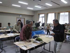 101116syokubutu-3.jpg